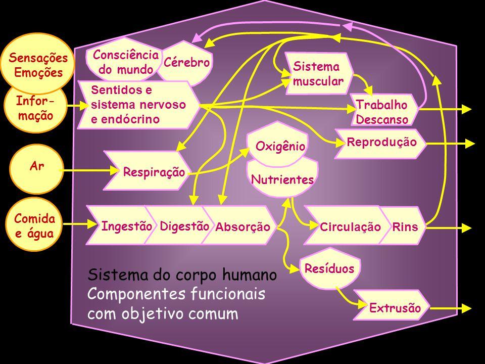 Como é o mundo interno? Como se conecta com o mundo externo? O que é o mundo externo? Forças, interações e evolução = sistema O corpo, a sociedade, o