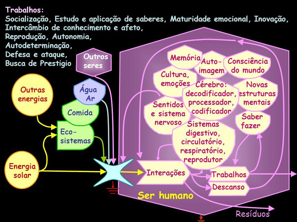Ingestão Sistema muscular Sistema do corpo humano Comida e água Ar Cérebro Nutrientes Consciência do mundo Digestão Extrusão Respiração Rins Absorção