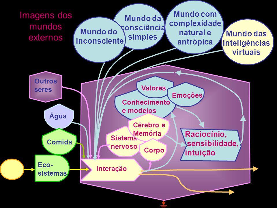 Um sistema intermediário entre o mundo interno e o externo? O mundo externo O mundo interno Um conjunto de forças e estoques que interagem em padrões