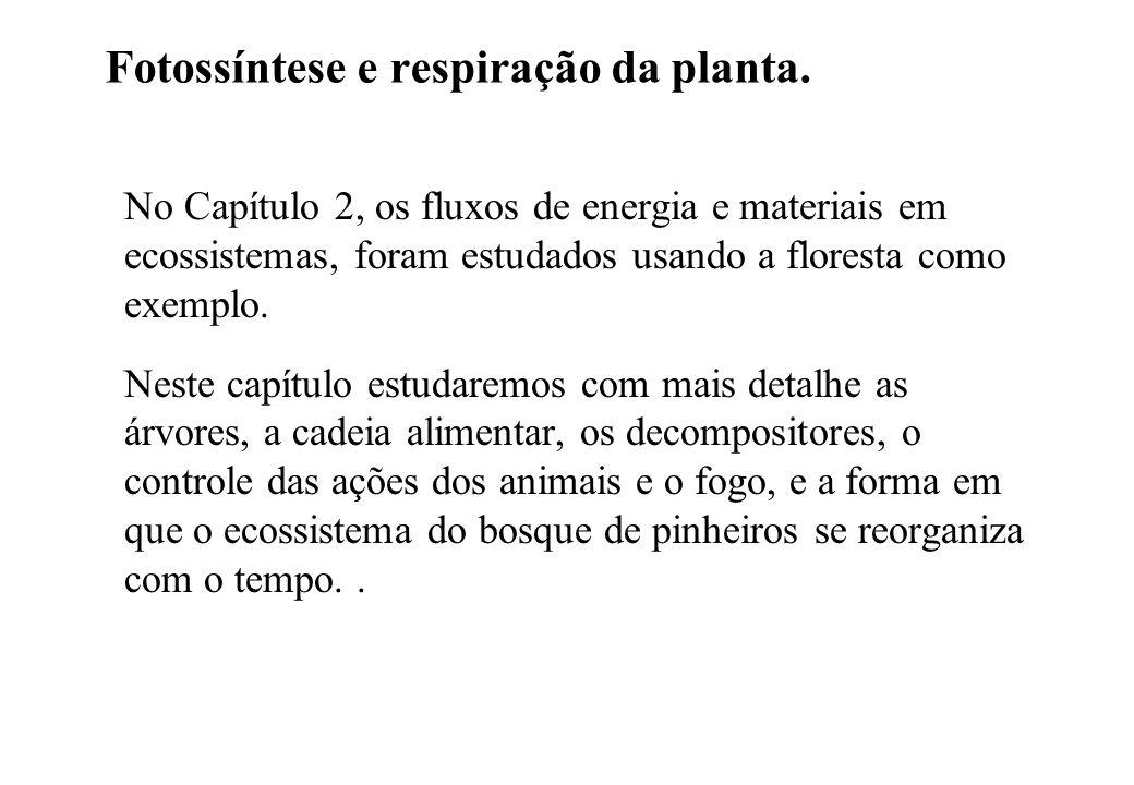 Figura 3.1. Fotossíntese, transpiração e respiração da planta.