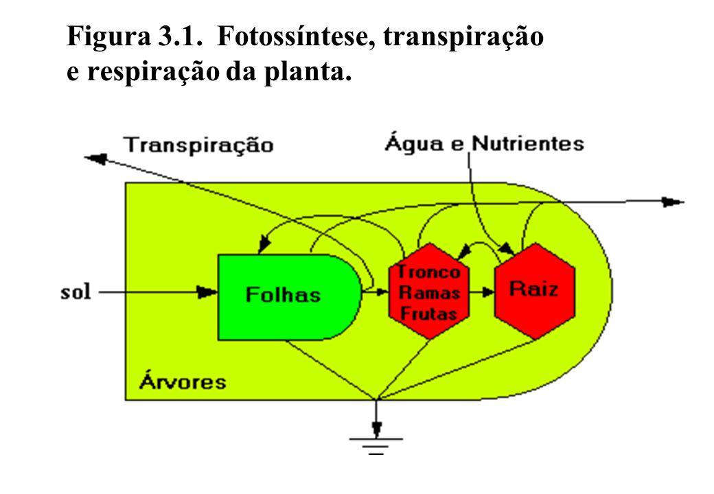Estrutura da cadeia alimentar Em uma cadeia simples de alimentação a planta produtora é comida por um consumidor de plantas (herbívoro), que por sua vez pode ser ingerido por um carnívoro.