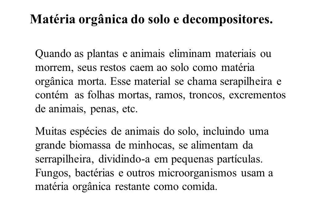 Matéria orgânica do solo e decompositores.