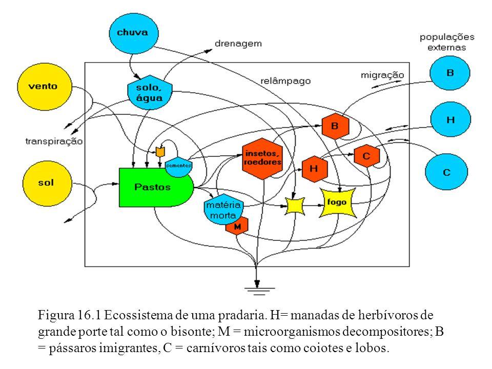 Figura 16.1 Ecossistema de uma pradaria. H= manadas de herbívoros de grande porte tal como o bisonte; M = microorganismos decompositores; B = pássaros