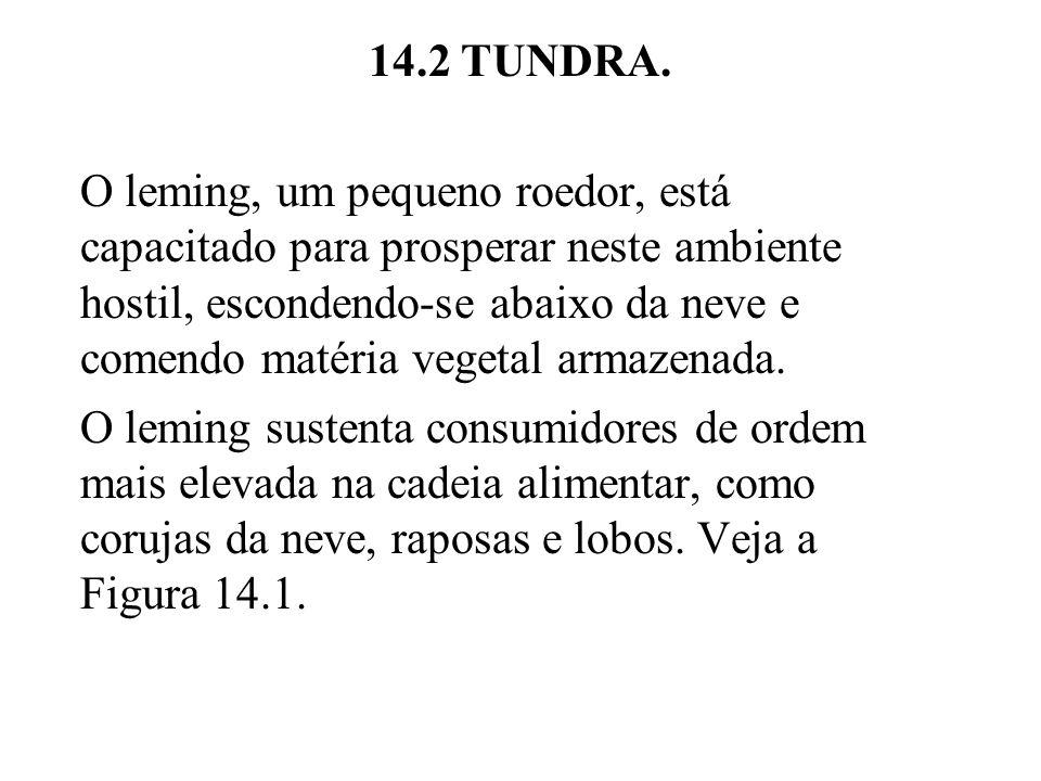 14.2 TUNDRA. O leming, um pequeno roedor, está capacitado para prosperar neste ambiente hostil, escondendo-se abaixo da neve e comendo matéria vegetal
