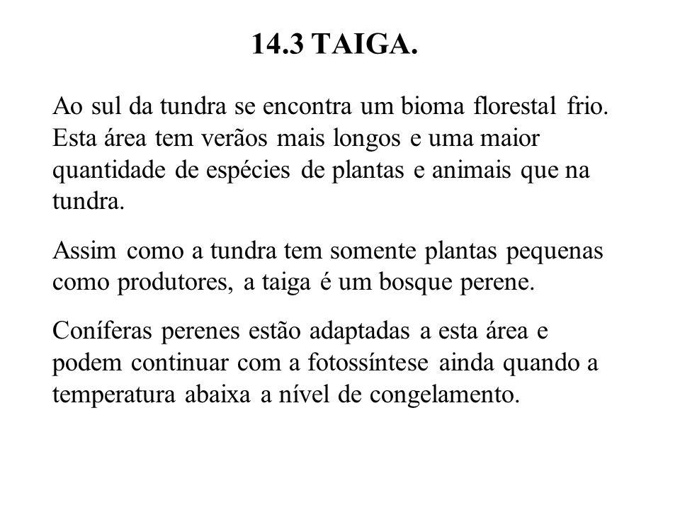 14.3 TAIGA. Ao sul da tundra se encontra um bioma florestal frio. Esta área tem verãos mais longos e uma maior quantidade de espécies de plantas e ani