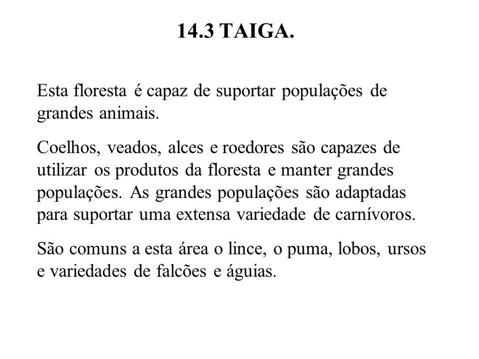 14.3 TAIGA. Esta floresta é capaz de suportar populações de grandes animais. Coelhos, veados, alces e roedores são capazes de utilizar os produtos da