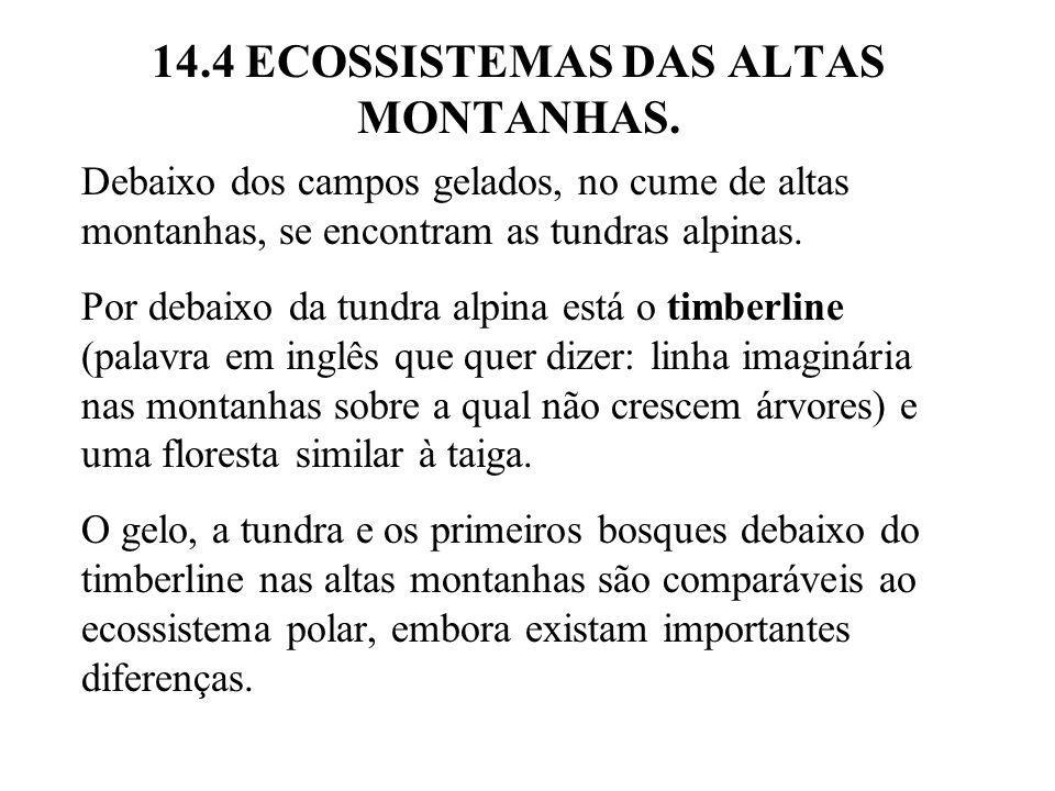 14.4 ECOSSISTEMAS DAS ALTAS MONTANHAS. Debaixo dos campos gelados, no cume de altas montanhas, se encontram as tundras alpinas. Por debaixo da tundra