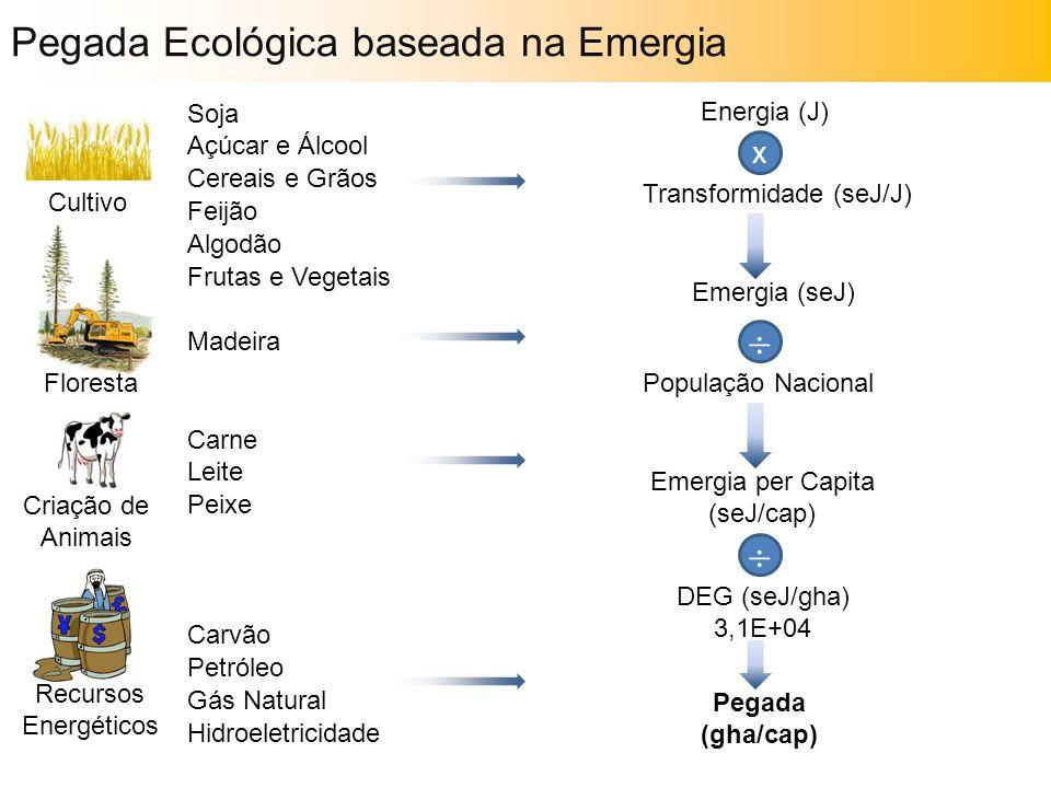 Soja Açúcar e Álcool Cereais e Grãos Feijão Algodão Frutas e Vegetais Madeira Carne Leite Peixe Carvão Petróleo Gás Natural Hidroeletricidade Cultivo