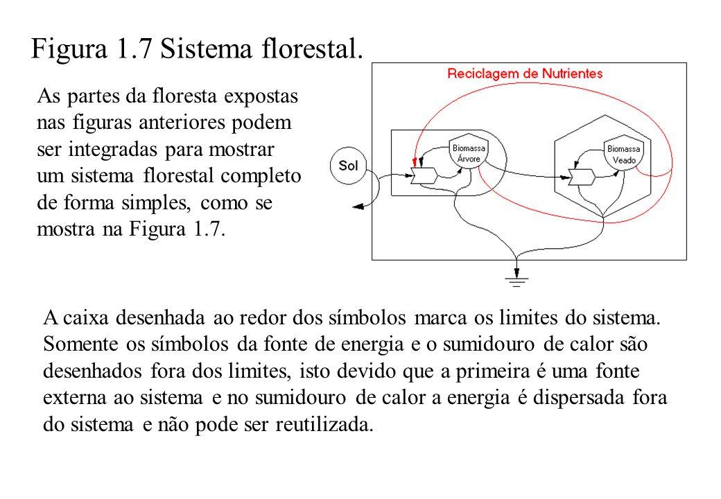 As partes da floresta expostas nas figuras anteriores podem ser integradas para mostrar um sistema florestal completo de forma simples, como se mostra