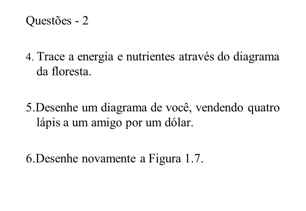 Questões - 2 4. Trace a energia e nutrientes através do diagrama da floresta. 5.Desenhe um diagrama de você, vendendo quatro lápis a um amigo por um d