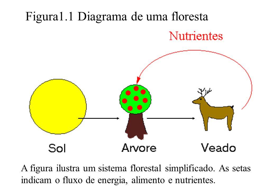 Figura1.1 Diagrama de uma floresta A figura ilustra um sistema florestal simplificado. As setas indicam o fluxo de energia, alimento e nutrientes.