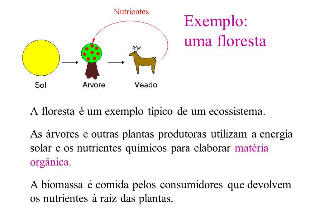 Exemplo: uma floresta A floresta é um exemplo típico de um ecossistema. As árvores e outras plantas produtoras utilizam a energia solar e os nutriente