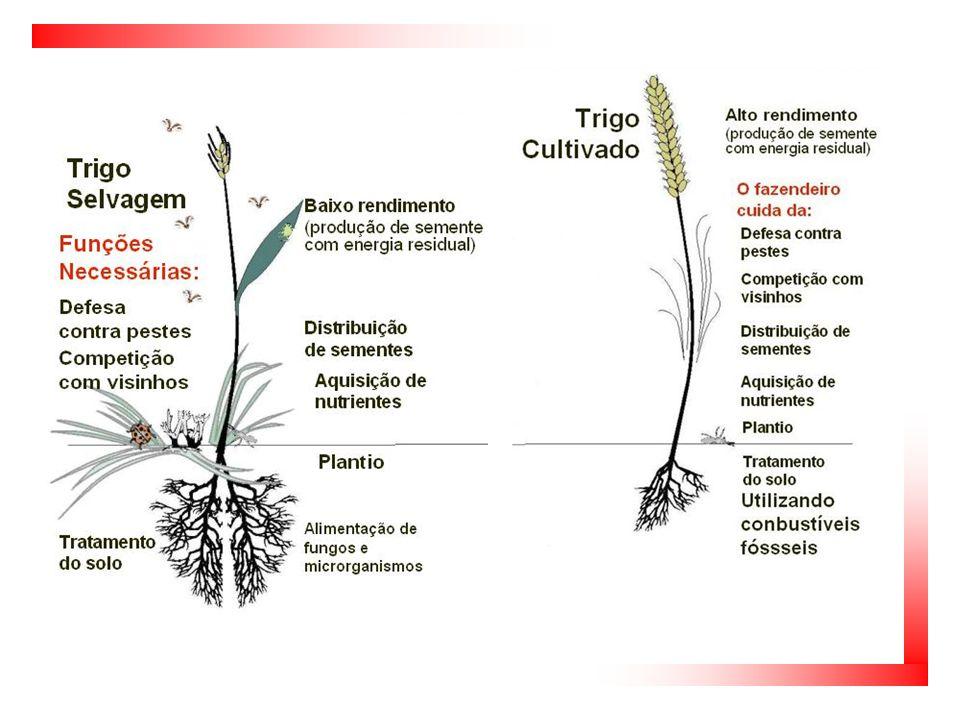  Estrutura de uma indústria  Os combustíveis se tornaram mais importantes do que o sol  Agrotóxicos  Fertilizantes  Sementes melhoradas geneticamente  Uso intensivo de mecanização A Produção de Alimentos hoje em dia