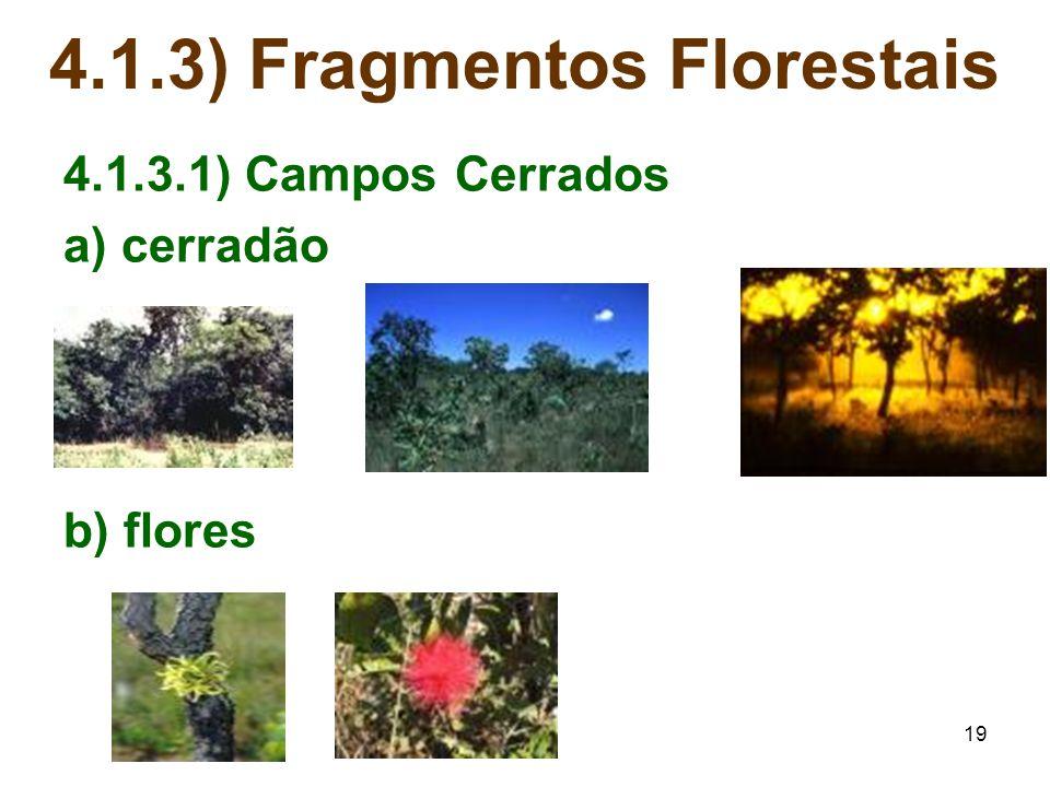 19 4.1.3) Fragmentos Florestais 4.1.3.1) Campos Cerrados a) cerradão b) flores