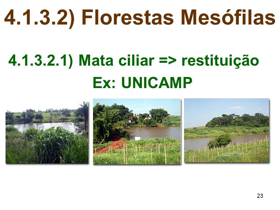 23 4.1.3.2) Florestas Mesófilas 4.1.3.2.1) Mata ciliar => restituição Ex: UNICAMP