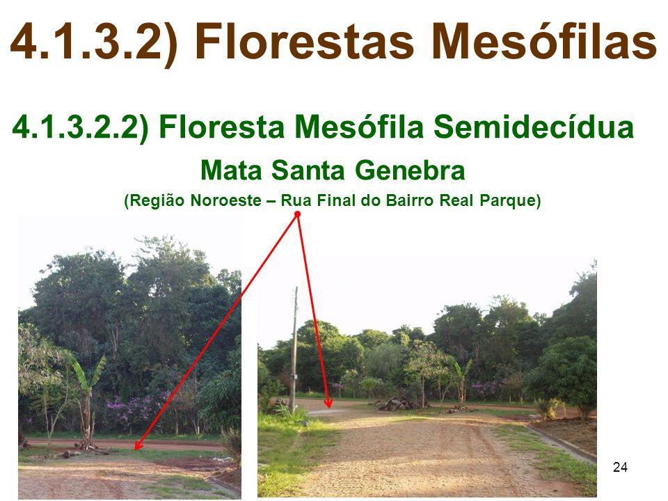 24 4.1.3.2) Florestas Mesófilas 4.1.3.2.2) Floresta Mesófila Semidecídua Mata Santa Genebra (Região Noroeste – Rua Final do Bairro Real Parque)