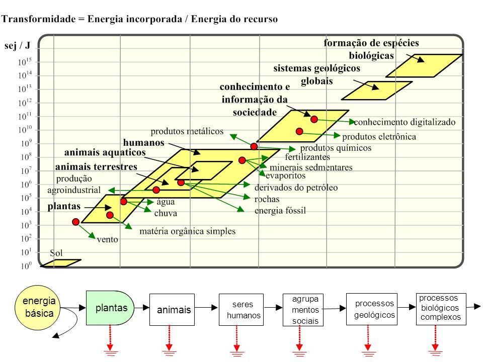 plantas animais seres humanos agrupa mentos sociais processos geológicos processos biológicos complexos energia básica