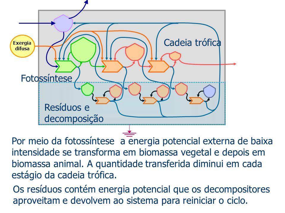 Por meio da fotossíntese a energia potencial externa de baixa intensidade se transforma em biomassa vegetal e depois em biomassa animal. A quantidade