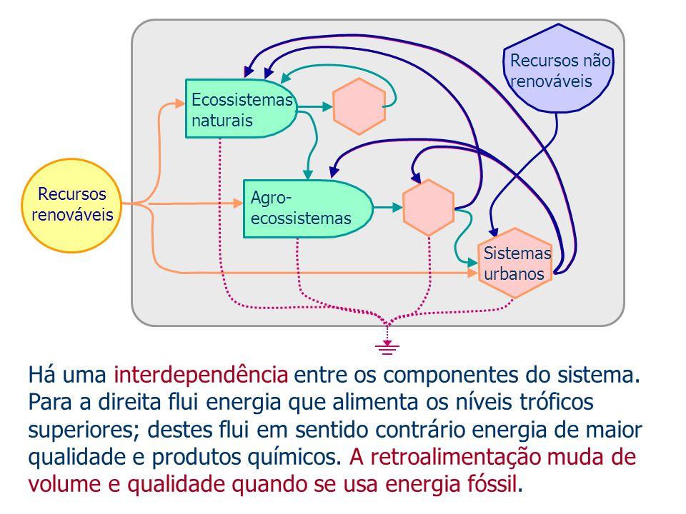Há uma interdependência entre os componentes do sistema. Para a direita flui energia que alimenta os níveis tróficos superiores; destes flui em sentid