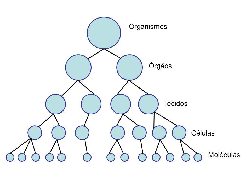 Organismos Órgãos Tecidos Células Moléculas