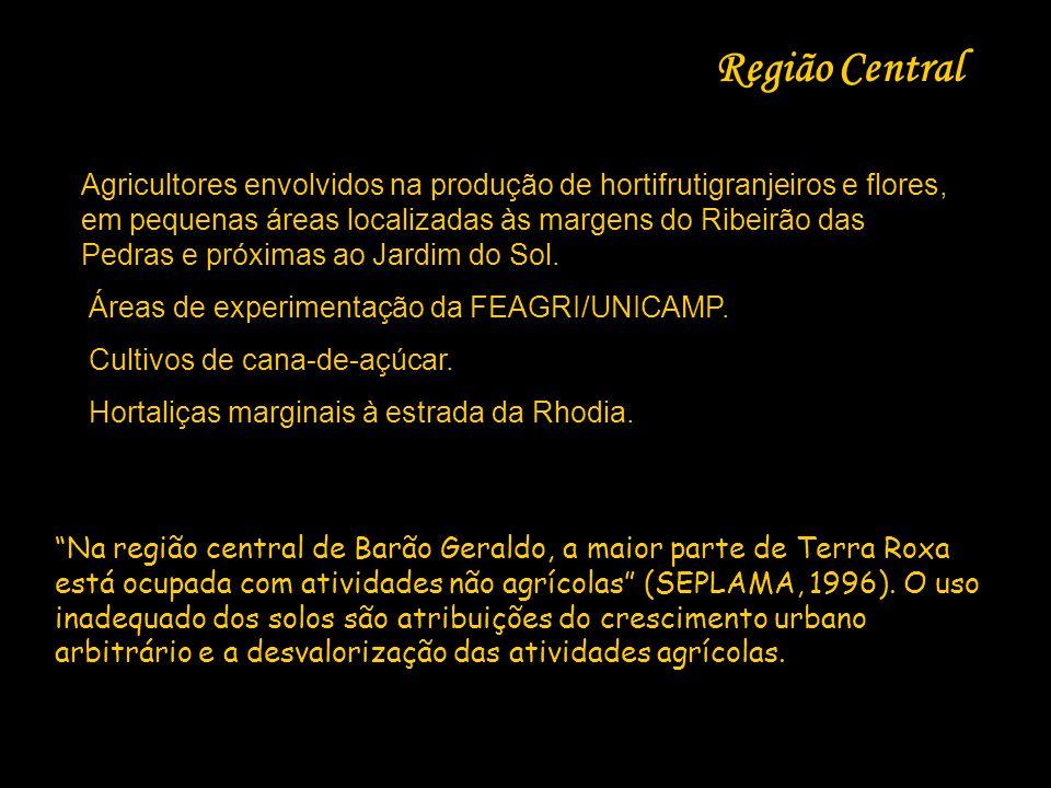Região Central Agricultores envolvidos na produção de hortifrutigranjeiros e flores, em pequenas áreas localizadas às margens do Ribeirão das Pedras e