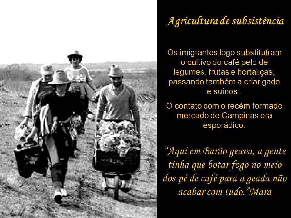 Agricultura de subsistência Os imigrantes logo substituíram o cultivo do café pelo de legumes, frutas e hortaliças, passando também a criar gado e suí