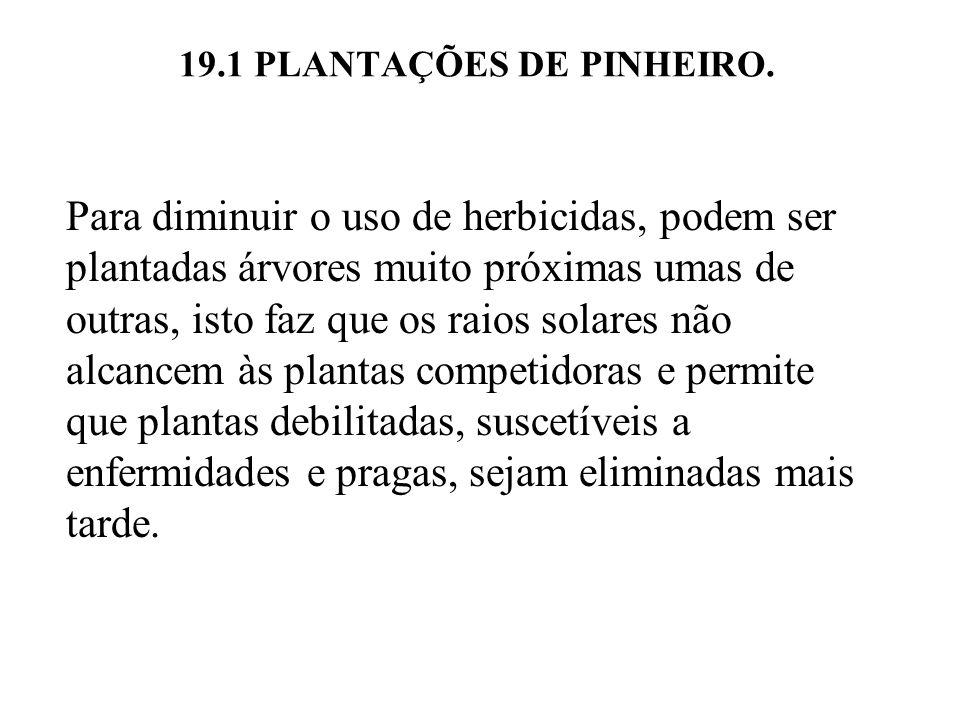 19.1 PLANTAÇÕES DE PINHEIRO. Para diminuir o uso de herbicidas, podem ser plantadas árvores muito próximas umas de outras, isto faz que os raios solar