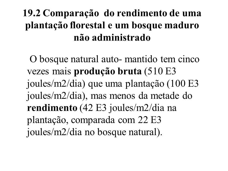 19.2 Comparação do rendimento de uma plantação florestal e um bosque maduro não administrado O bosque natural auto- mantido tem cinco vezes mais produ