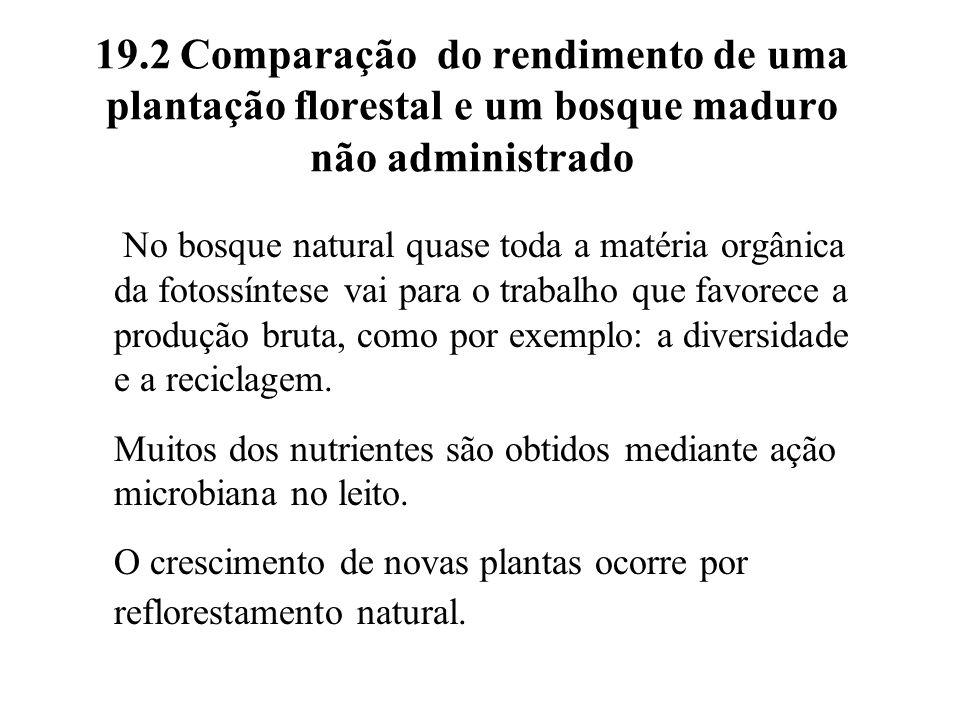 19.2 Comparação do rendimento de uma plantação florestal e um bosque maduro não administrado No bosque natural quase toda a matéria orgânica da fotoss