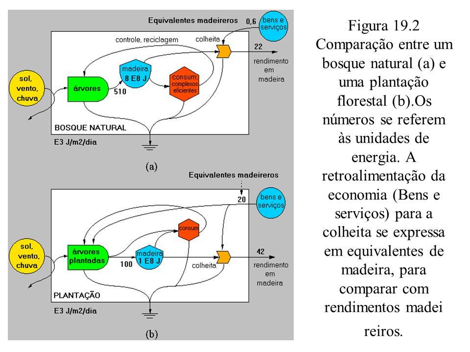 Figura 19.2 Comparação entre um bosque natural (a) e uma plantação florestal (b).Os números se referem às unidades de energia. A retroalimentação da e