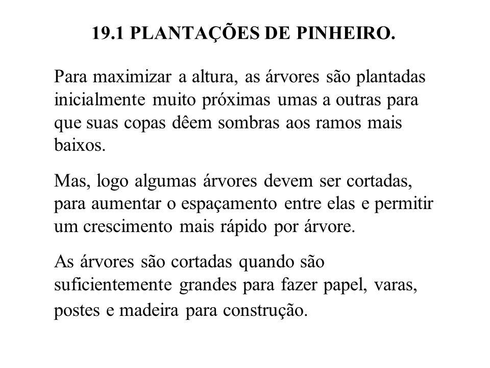19.1 PLANTAÇÕES DE PINHEIRO. Para maximizar a altura, as árvores são plantadas inicialmente muito próximas umas a outras para que suas copas dêem somb