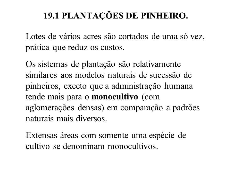 19.1 PLANTAÇÕES DE PINHEIRO. Lotes de vários acres são cortados de uma só vez, prática que reduz os custos. Os sistemas de plantação são relativamente
