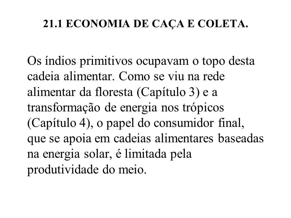 21.1 ECONOMIA DE CAÇA E COLETA. Os índios primitivos ocupavam o topo desta cadeia alimentar. Como se viu na rede alimentar da floresta (Capítulo 3) e