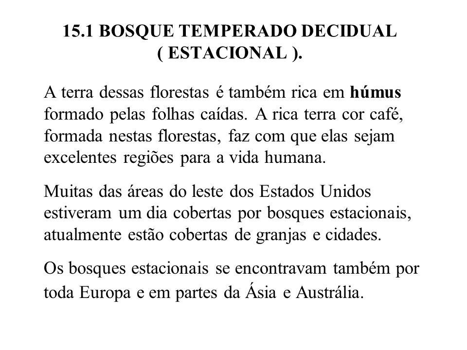 15.1 BOSQUE TEMPERADO DECIDUAL ( ESTACIONAL ). A terra dessas florestas é também rica em húmus formado pelas folhas caídas. A rica terra cor café, for