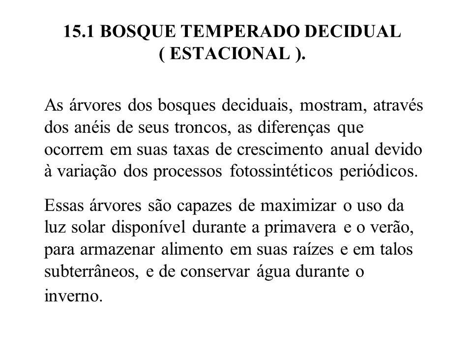 15.1 BOSQUE TEMPERADO DECIDUAL ( ESTACIONAL ). As árvores dos bosques deciduais, mostram, através dos anéis de seus troncos, as diferenças que ocorrem