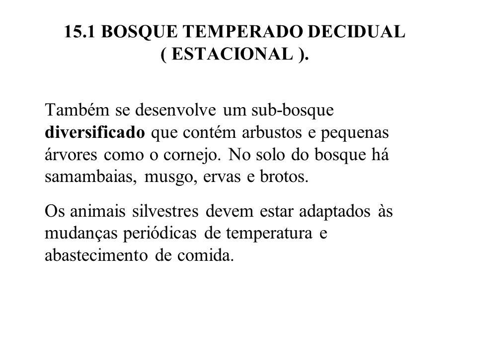 15.1 BOSQUE TEMPERADO DECIDUAL ( ESTACIONAL ). Também se desenvolve um sub-bosque diversificado que contém arbustos e pequenas árvores como o cornejo.