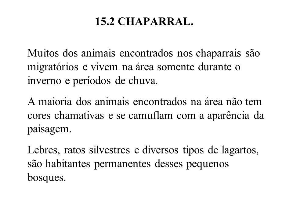 15.2 CHAPARRAL. Muitos dos animais encontrados nos chaparrais são migratórios e vivem na área somente durante o inverno e períodos de chuva. A maioria
