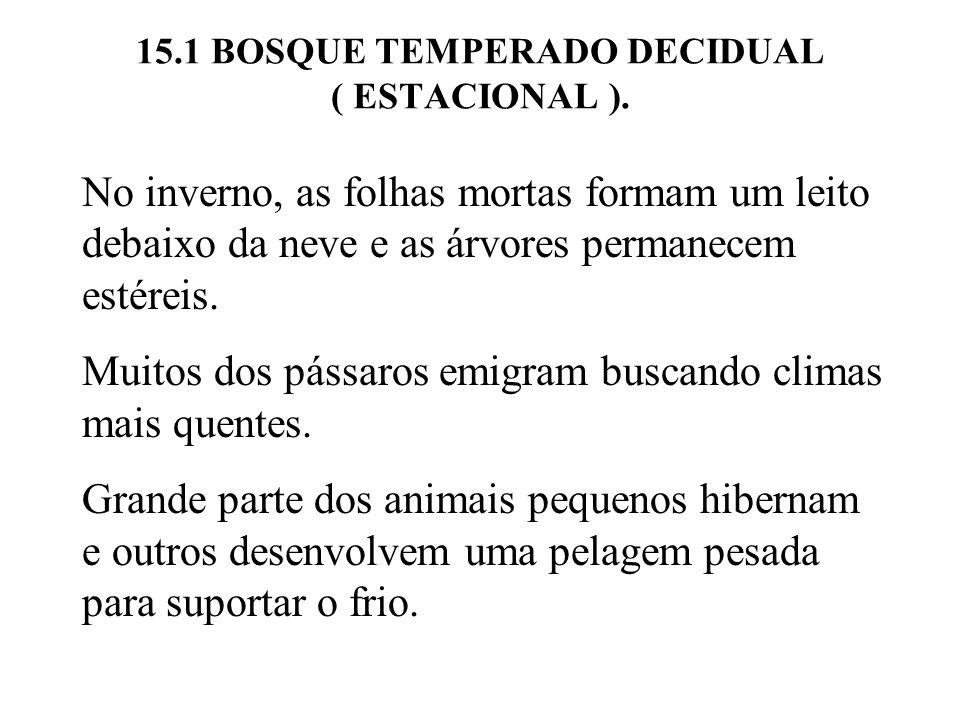 15.1 BOSQUE TEMPERADO DECIDUAL ( ESTACIONAL ). No inverno, as folhas mortas formam um leito debaixo da neve e as árvores permanecem estéreis. Muitos d