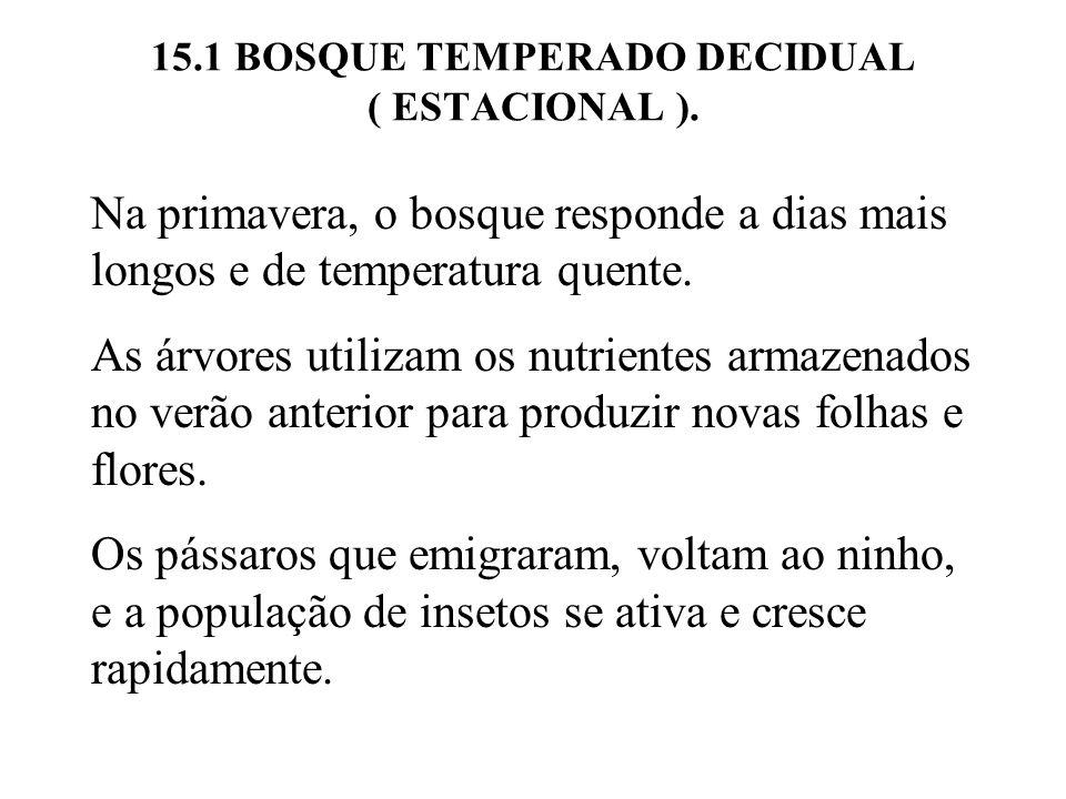 15.5 SUCESSÃO FLORESTAL.