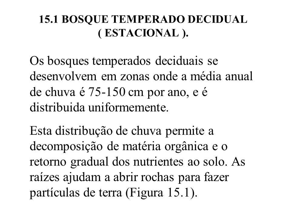 15.1 BOSQUE TEMPERADO DECIDUAL ( ESTACIONAL ). Os bosques temperados deciduais se desenvolvem em zonas onde a média anual de chuva é 75-150 cm por ano