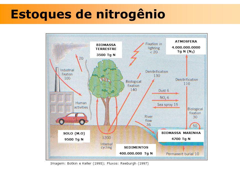 Estoques de nitrogênio Imagem: Botkin e Keller (1995); Fluxos: Reeburgh (1997) BIOMASSA TERRESTRE 3500 Tg N ATMOSFERA 4.000.000.0000 Tg N (N 2 ) SOLO