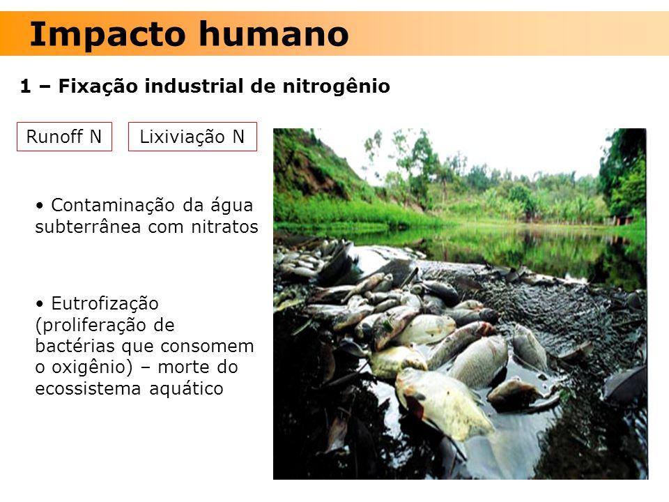 Impacto humano 1 – Fixação industrial de nitrogênio Lixiviação NRunoff N Contaminação da água subterrânea com nitratos Eutrofização (proliferação de b