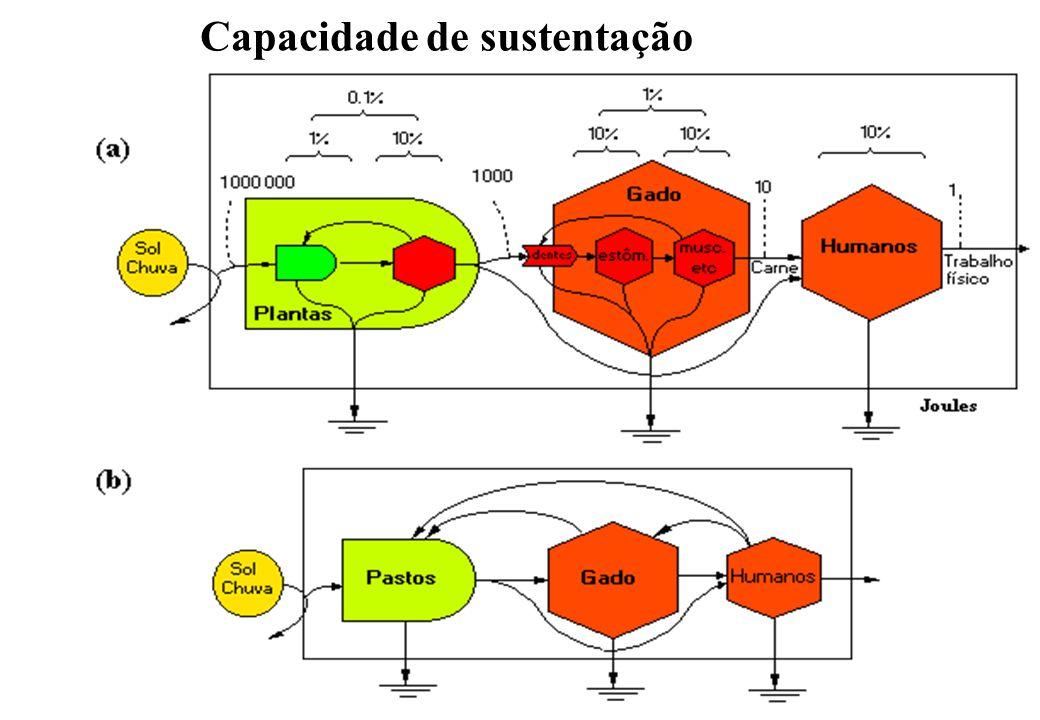 Capacidade de sustentação