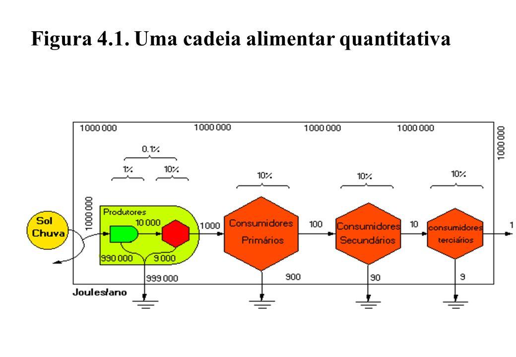 Figura 4.1. Uma cadeia alimentar quantitativa