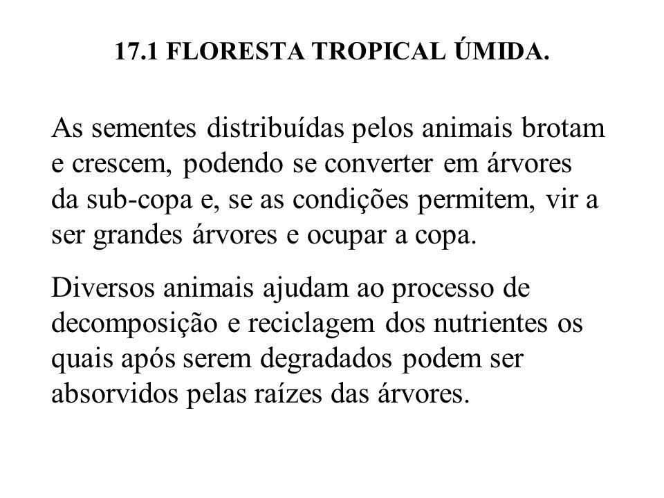 17.1 FLORESTA TROPICAL ÚMIDA. As sementes distribuídas pelos animais brotam e crescem, podendo se converter em árvores da sub-copa e, se as condições