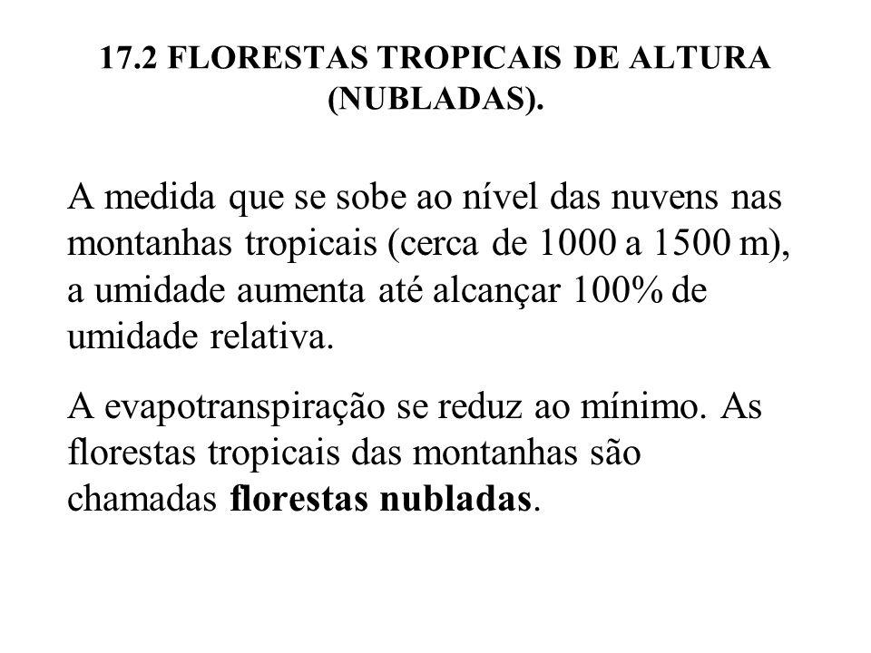 17.2 FLORESTAS TROPICAIS DE ALTURA (NUBLADAS). A medida que se sobe ao nível das nuvens nas montanhas tropicais (cerca de 1000 a 1500 m), a umidade au
