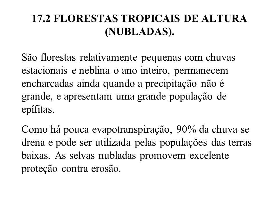 17.2 FLORESTAS TROPICAIS DE ALTURA (NUBLADAS). São florestas relativamente pequenas com chuvas estacionais e neblina o ano inteiro, permanecem encharc