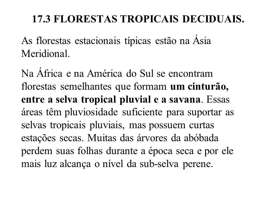 17.3 FLORESTAS TROPICAIS DECIDUAIS. As florestas estacionais típicas estão na Ásia Meridional. Na África e na América do Sul se encontram florestas se