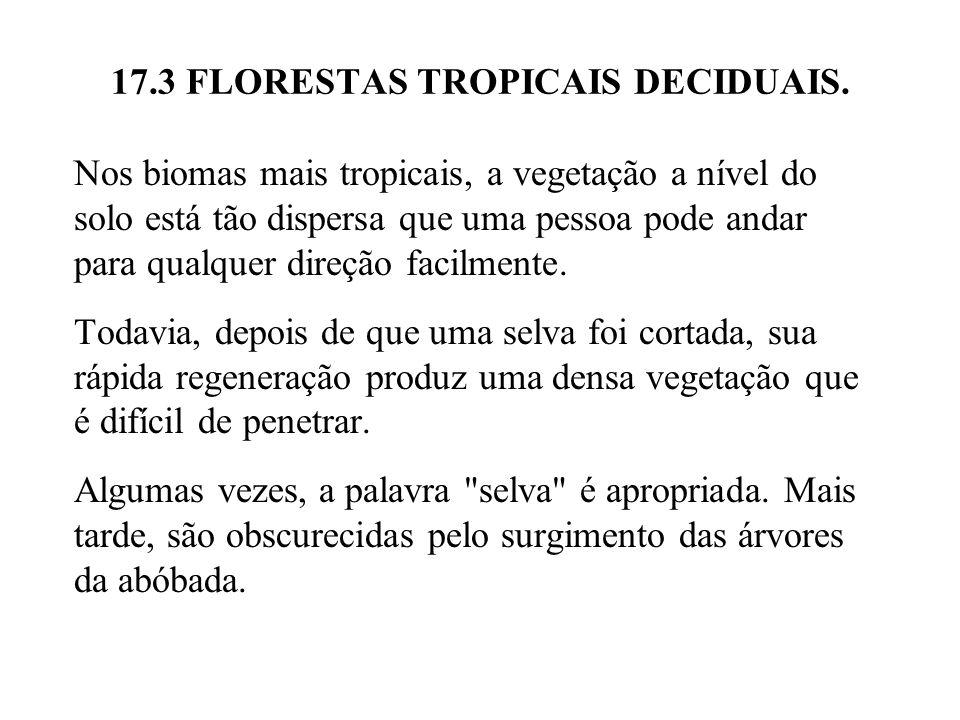 17.3 FLORESTAS TROPICAIS DECIDUAIS. Nos biomas mais tropicais, a vegetação a nível do solo está tão dispersa que uma pessoa pode andar para qualquer d
