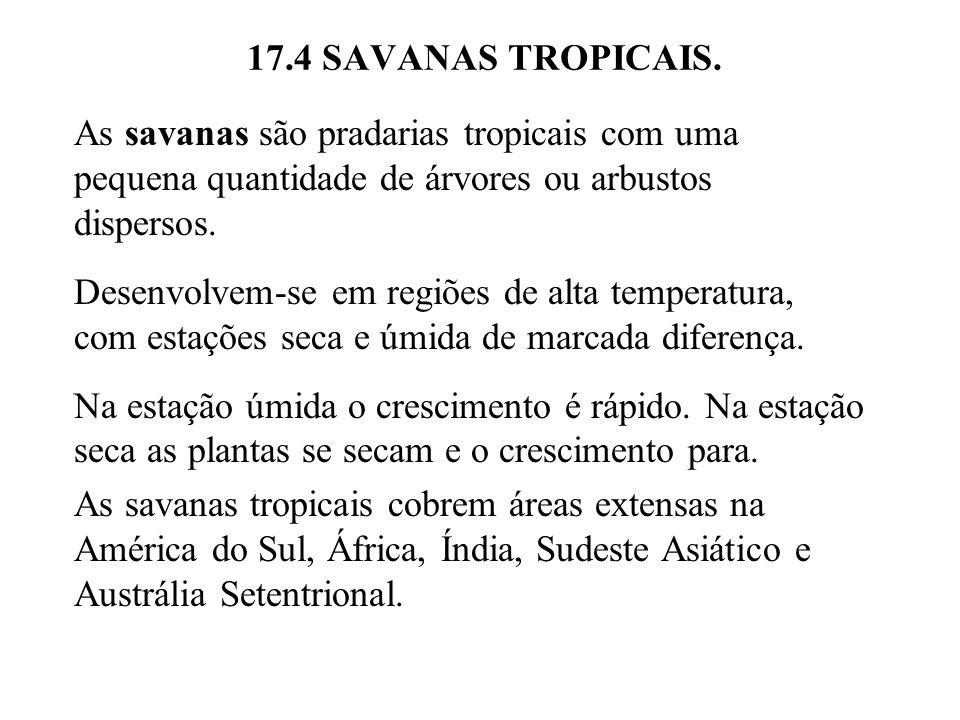 17.4 SAVANAS TROPICAIS. As savanas são pradarias tropicais com uma pequena quantidade de árvores ou arbustos dispersos. Desenvolvem-se em regiões de a